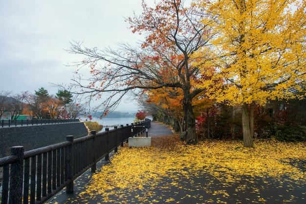 Jesienią kolorowe drzewa w pobliżu jeziora kawaguchiko