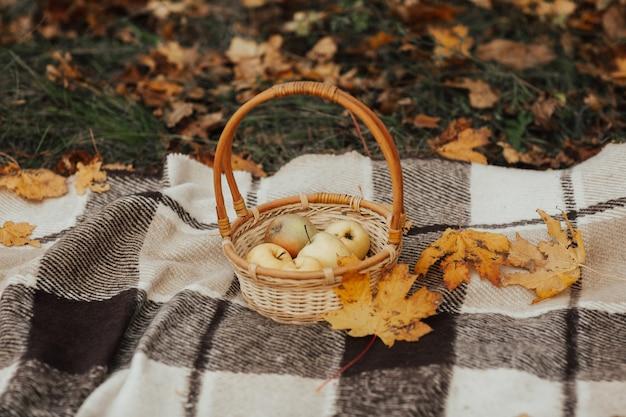 Jesienią kosz z dojrzałymi jabłkami na kraciastej kracie w parku, jesienny piknik.