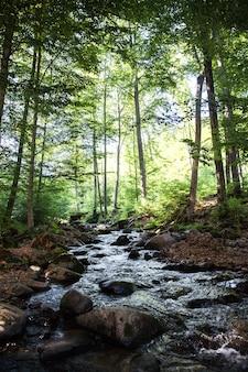 Jesienią w górach pocono w pensylwanii spływa niewielki strumień.