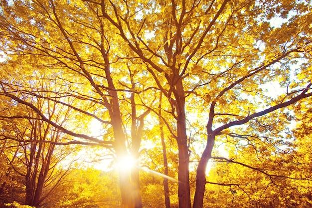 Jesienią w lesie.