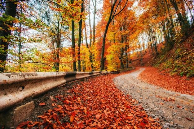Jesienna aleja. dramatyczna sceneria rano karpacka ukraina europa