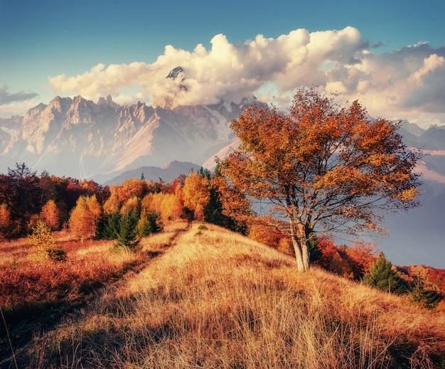 Jesienna aleja. fantastyczne chmury cumulus, dramatyczne niebo. zachód słońca