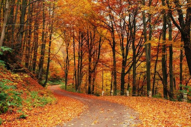 Jesienna aleja. świat piękna karpaty.
