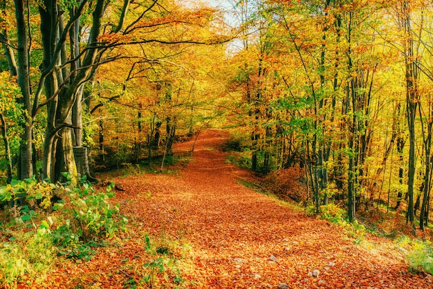 Jesienna aleja. świat piękności karpaty ukraina europa
