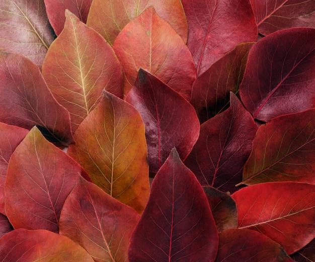 Jesienna granica. skład żywe czerwone i żółte liście na białym tle.
