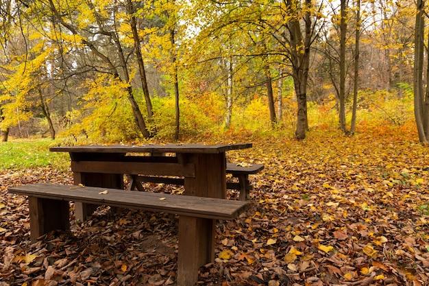 Jesienna idylla, samotna ławka w parku czeka na odwiedzających.