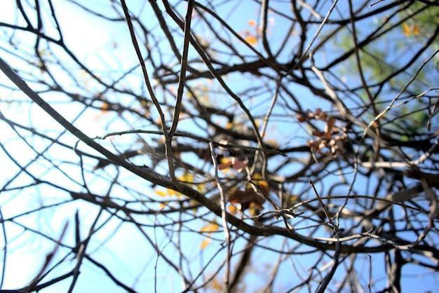 Jesienna jesień zima lub chłodne kolory sezonu na zewnątrz w leśnym klimacie suche żółtawe gałązki liści