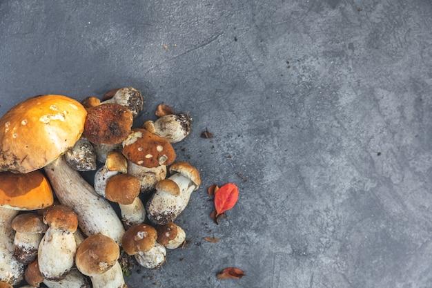 Jesienna jesienna kompozycja surowe jadalne grzyby grosza bułka na ciemnym czarnym tle łupków ceps ove...