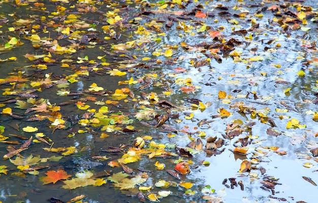 Jesienna kałuża z odciętymi liśćmi w tle