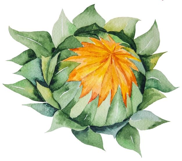 Jesienna kolekcja akwareli z żółtym słonecznikiem na białym tle