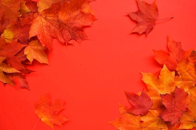 Jesienna, kolorowa kompozycja. rama jesiennych liści klonu na białym tle. leżał na płasko, widok z góry, miejsce na kopię.