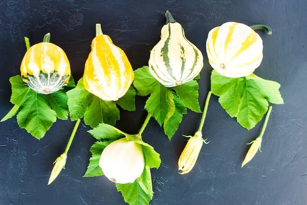 Jesienna kompozycja dekoracyjnych dyń o różnych kształtach, kwiatach dyni i liściach na czarnym tle. płaski układ.