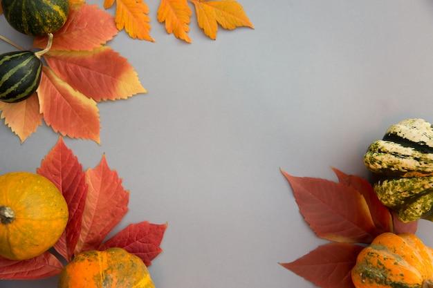 Jesienna kompozycja. dynie, liście na pastelowym szarym tle.