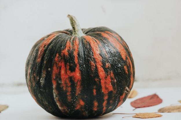 Jesienna kompozycja i jasne liście i dynia