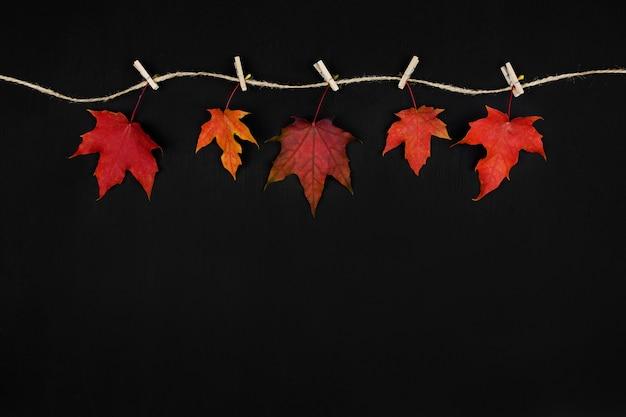 Jesienna kompozycja. jesieni klonowego drzewa liście na czarnym tle. leżał płasko, widok z góry, miejsce