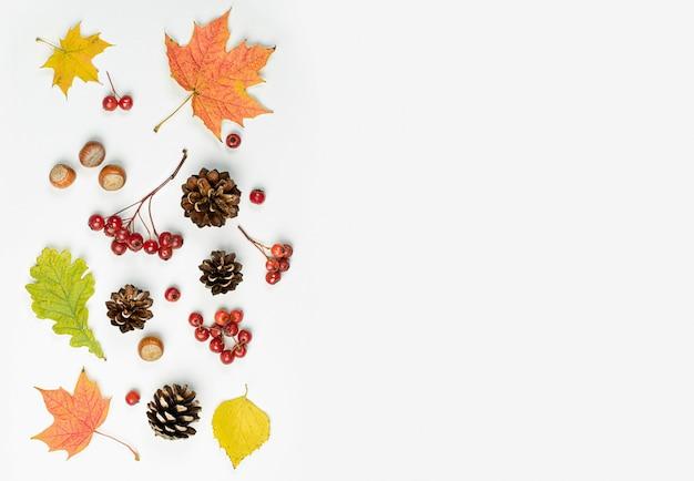 Jesienna kompozycja liści, szyszek, orzechów i jagód na jasnym tle