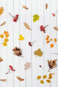 Jesienna kompozycja. pomarańczowe liście i jagody na białym tle drewna. płaski układanie, widok z góry