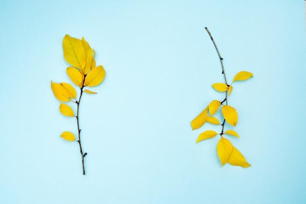 Jesienna kompozycja, rama z liści. dwie gałęzie z żółtymi liśćmi, śliwki, na jasnoniebieskim tle.