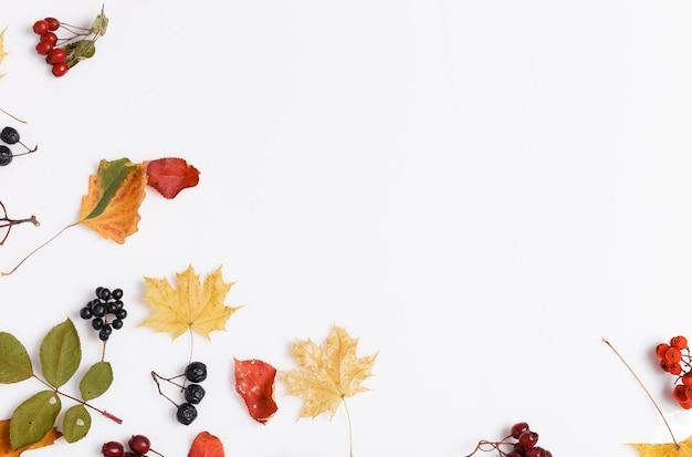 Jesienna kompozycja wykonana z jesiennych suchych liści wielobarwnych i jagód aronii, jarzębiny, głogu na białym tle. jesień, jesień koncepcja. płaski układanie, widok z góry, kopia przestrzeń