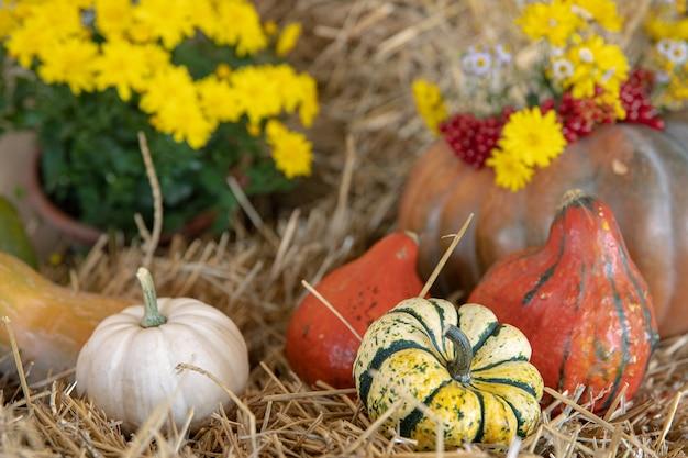 Jesienna kompozycja z dyniami w stylu rustykalnym