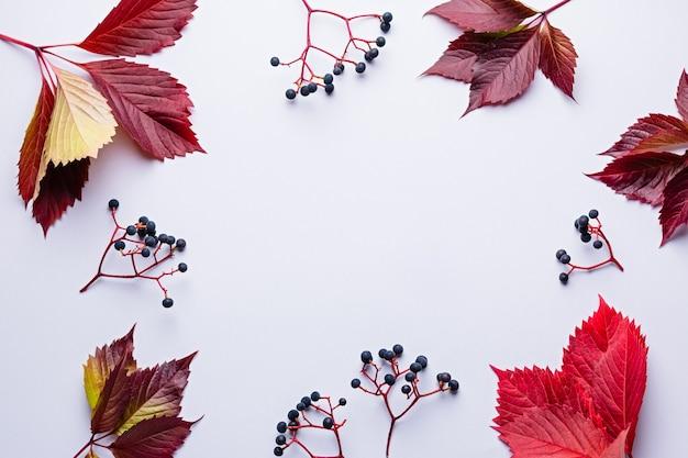 Jesienna kompozycja z dzikich winogron i czerwonych liści na jasnoszarym tle. jesień, koncepcja dziękczynienia, kopia przestrzeń