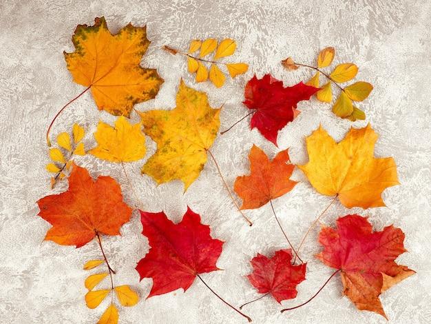 Jesienna kompozycja z liści na białym tle betonu.