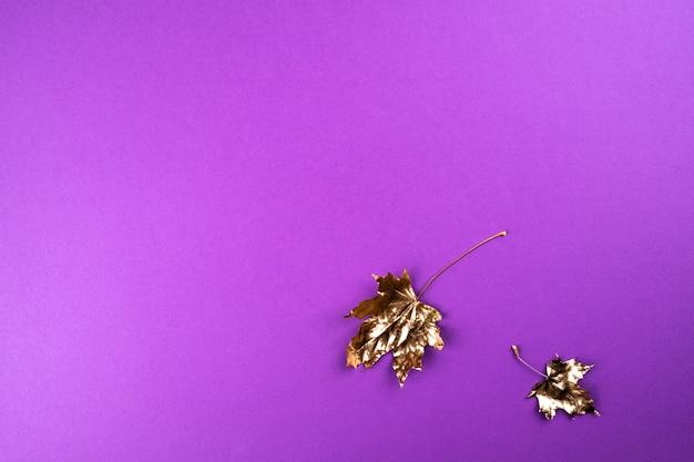 Jesienna kompozycja. złote liście klonu na fioletowo.
