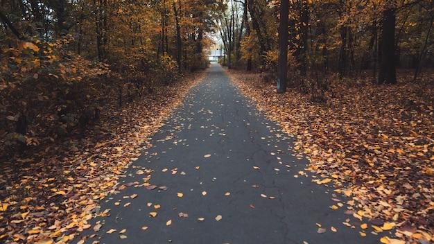 Jesienna leśna droga. kolorowy krajobraz z drzewami, wiejską drogą, pomarańczowymi liśćmi.