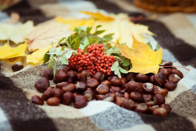 Jesienna martwa natura jarzębina liść klonu rozrzucone kasztany
