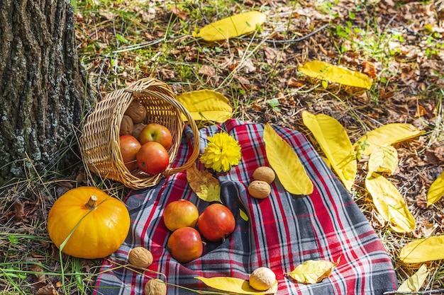 Jesienna martwa natura z kraciastą kratą, wiklinowym koszem, jabłkami, dynią i orzechami włoskimi. jesienny piknik