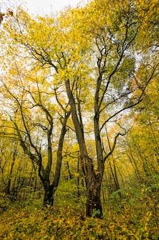 Jesienna pogoda w lesie z żółtymi i zielonymi liśćmi