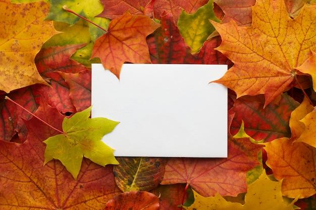 Jesienna rama wykonana z liści z białą ramką. widok płaski, widok z góry.