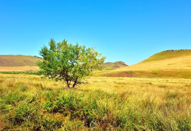 Jesienna roślinność stepowa pod czystym, błękitnym niebem terytorium krasnojarska syberia rosja