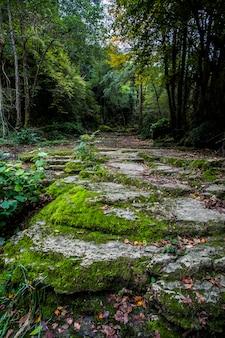 Jesienna rzeka w la vall d en bas, la garrotxa, hiszpania.