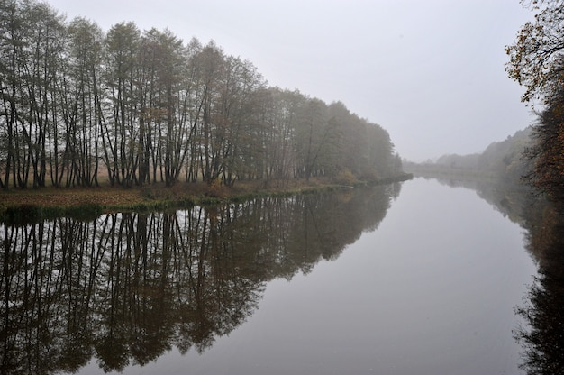 Jesienna rzeka we mgle i drzewa bez liści