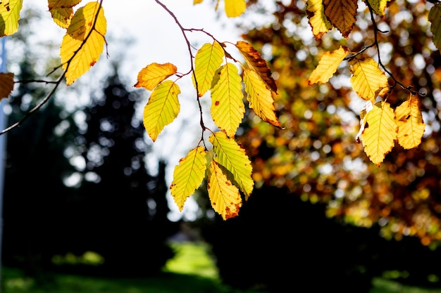 Jesienna scena. spadek. drzewa i liście w słońcu