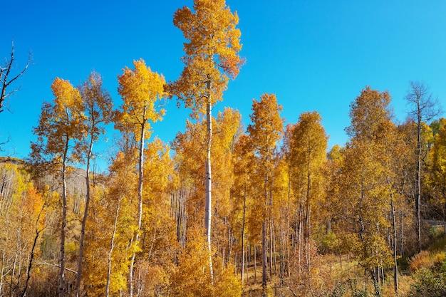 Jesienna scena w żółtych odcieniach. tło upadku.