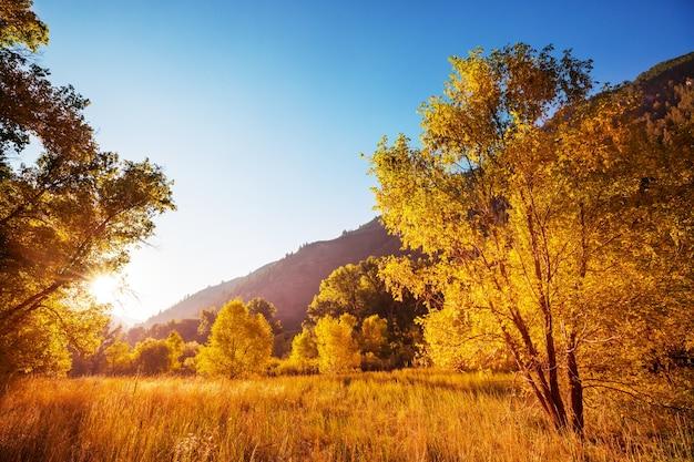 Jesienna scena w żółtych odcieniach