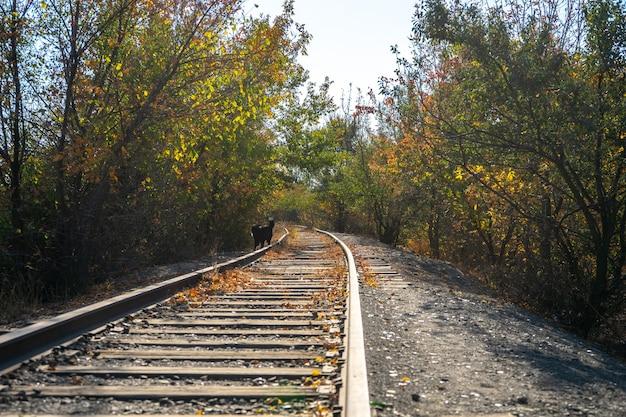 Jesienna scena ze starą zardzewiałą koleją