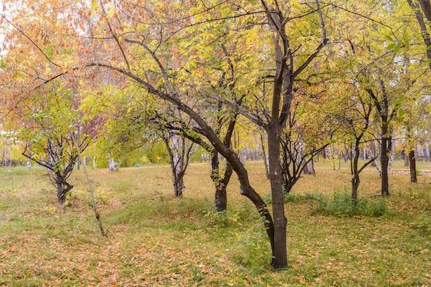 Jesienna sceneria lasu z promieniami ciepłego światła oświetlającego złote liście i ścieżką prowadzącą do sceny