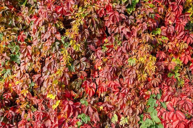 Jesienna ściana z kolorowymi liśćmi