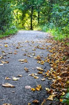Jesienna ścieżka z liśćmi w lesie z malejącą perspektywą. las namorzynowy. liście pomarańczy