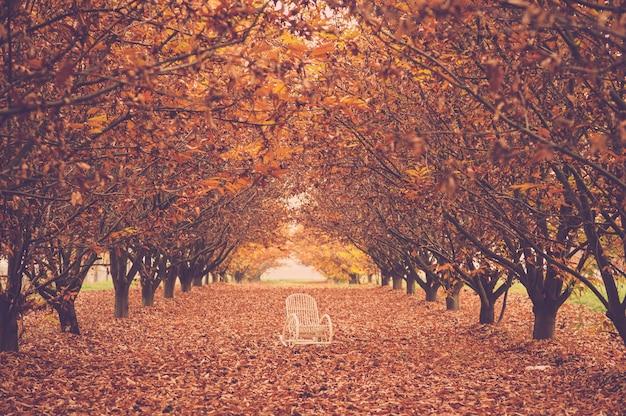 Jesienna smutna koncepcja z białym krzesłem pośrodku czerwono-żółtego lasu