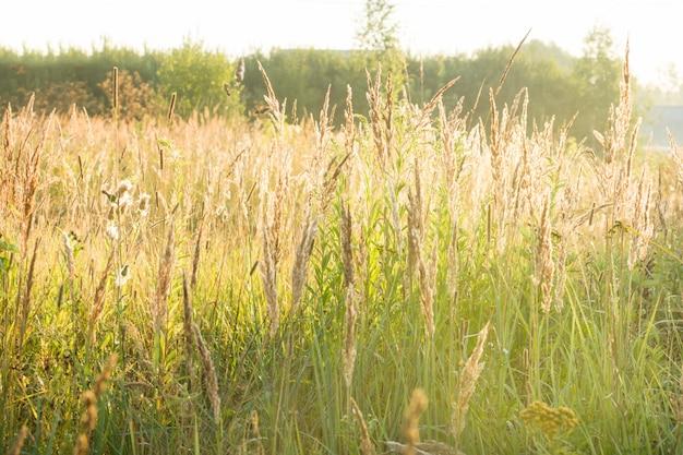 Jesienna trawa w porannym słońcu. krajobraz kraju
