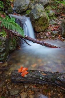 Jesienna wiosna z żółtymi liśćmi. portugalia, monchique.
