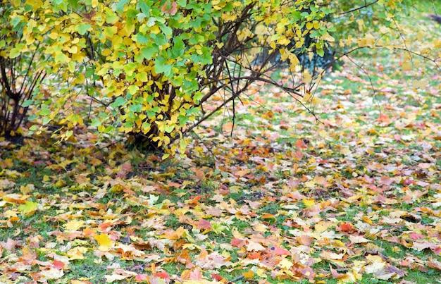 Jesienna zielona trawa z odciętymi liśćmi i różnobarwnym krzewem