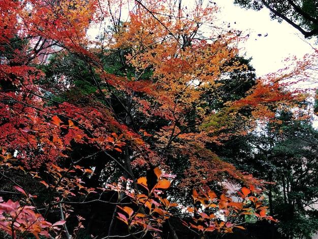 Jesienne czerwone liście natura krajobraz