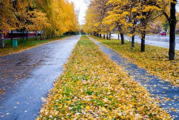Jesienne deszczowe ślady z żółtymi liśćmi
