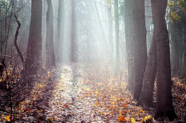 Jesienne drewno pokryte jest porannym jasnym słońcem