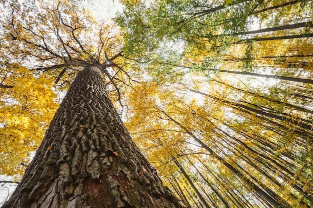 Jesienne drzewa leśne. natura zielone światło słoneczne drewna.